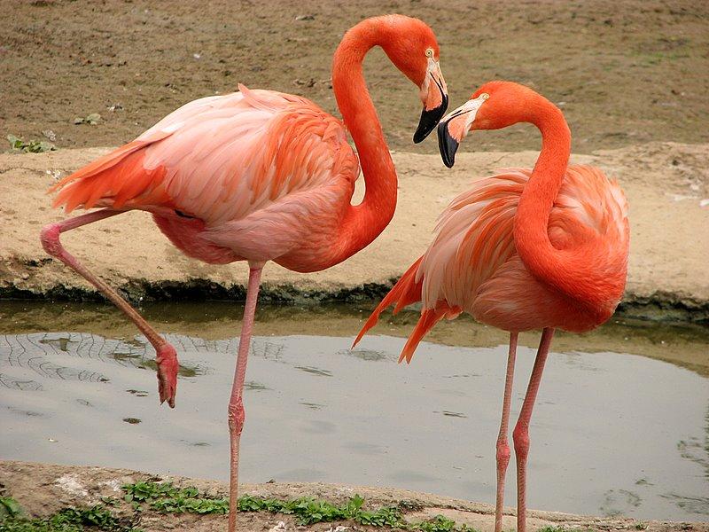 А ведь когда-то были родиной фламинго