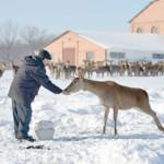 Самарским фермерам дадут 28 миллионов на обзаведение