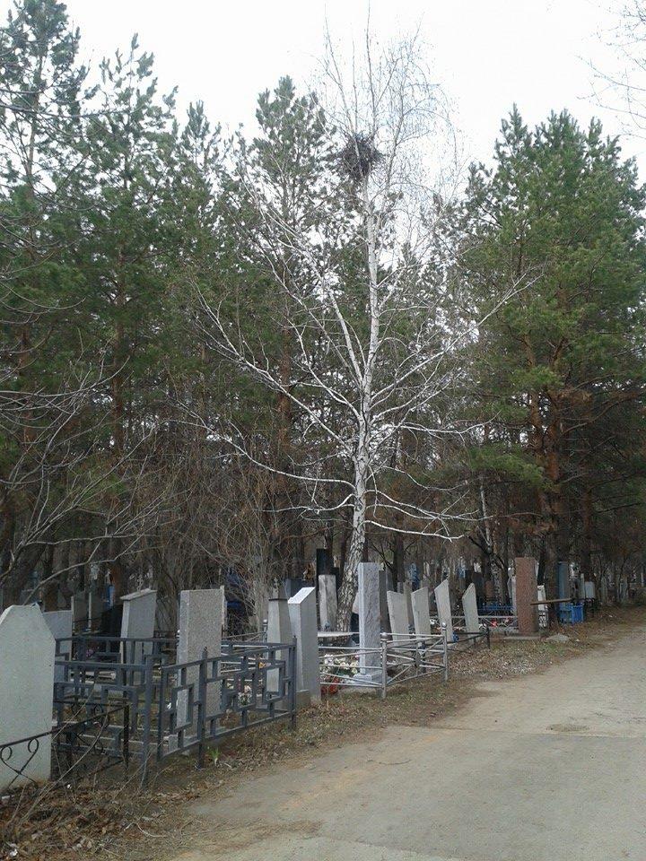 кладбище2