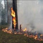 236 пожаров произошло в области за май