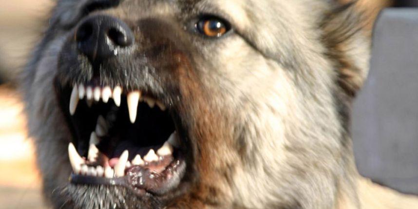 Голову мертвой пенсионерки откусила собака