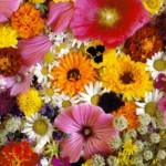 Цветы победы уже расцветают