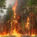 В лесах пожароопасно!