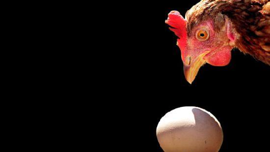 В Самаре дорожают и куры, и яйца