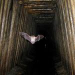 В Ширяево открывается музей летучей мыши
