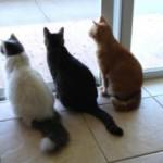 Домашние кошки пытались съесть хозяйку – откусили три пальца на ноге