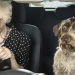 Пенсионерка за рулем «Запорожца» устроила ДТП: пятеро в больнице