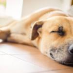 Советы психолога по выбору домашнего животного