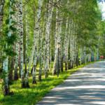 Жителям Кировского района вернут рекреационную зону у Колизея