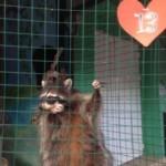 В Самарском зоопарке выбрали лучшую влюблённую пару