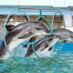 Самара голосует против строительства дельфинария