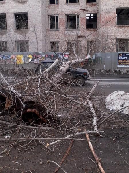На ул. Первомайской дерево упало на машину — водитель госпитализирован