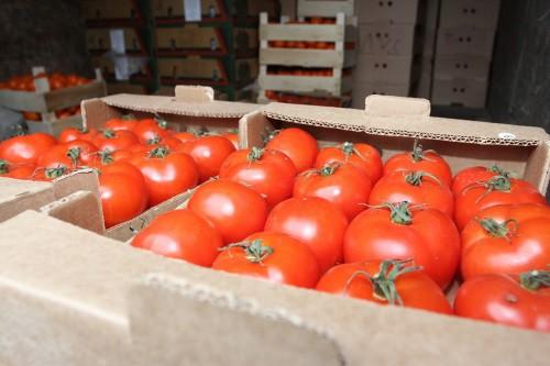 Враг не пройдет: в самаре уничтожили почти тонну турецких помидоров