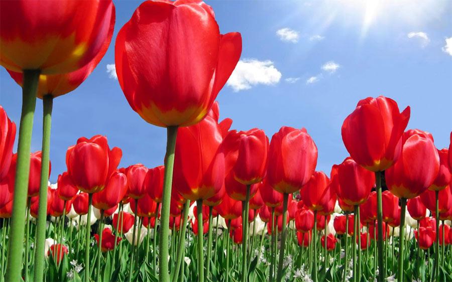 Цветы с доставкой – вся Россия просто в восторге