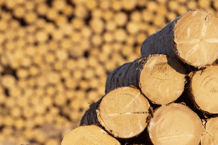 Лесопильные станки: виды, критерии выбора и преимущества