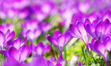 Напомните близким о весне среди зимы с доставкой цветов