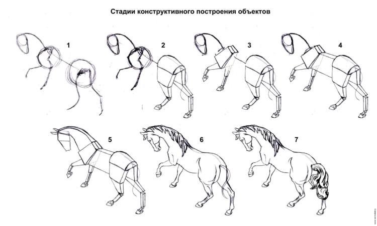 стадии рисования коня