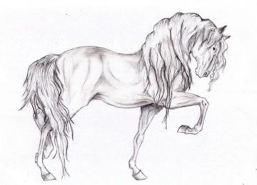 Как нарисовать лошадь карандашом