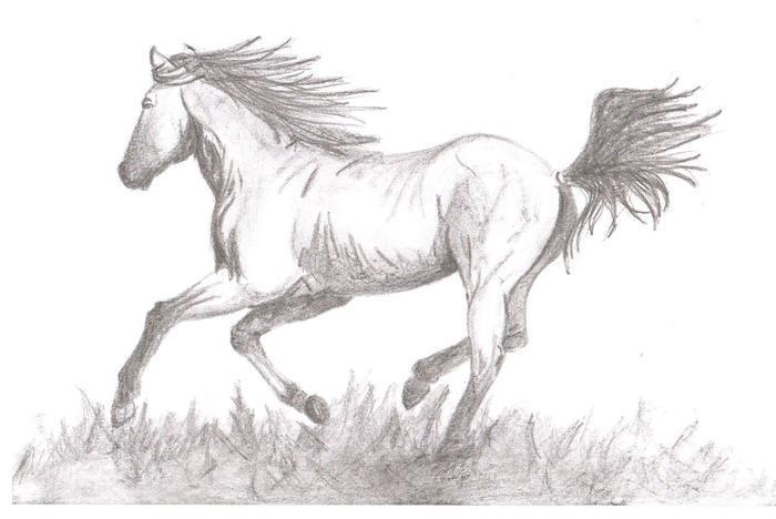 лошадь рисунок карандашом